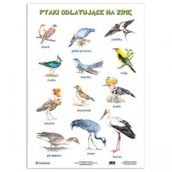 Plansza Ptaki odlatujące / pozostające na ziemię