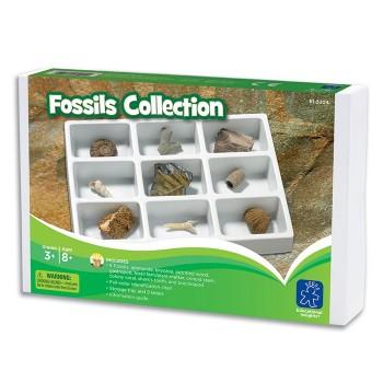 Kolekcja skamielin