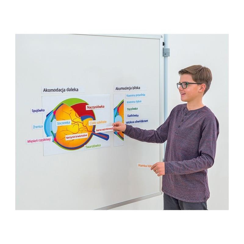 Oko człowieka - schemat magnetyczny
