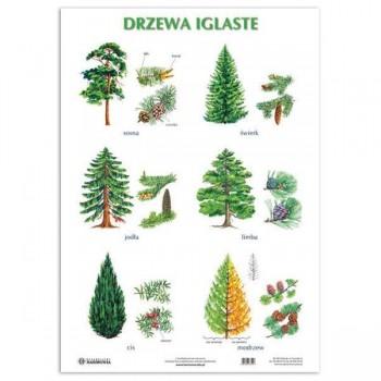 Plansza Drzewa iglaste/ liściaste