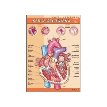 Plansza - Biologia - serce człowieka  70x100cm