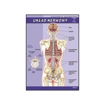 Plansza - Biologia - Układ nerwowy