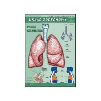 Plansza - Biologia - Układ oddechowy
