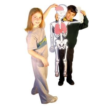 Szkielet z organami