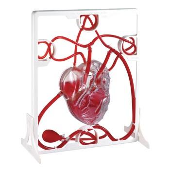 Model serca z pompką