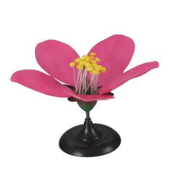 Model kwiatu brzoskwini