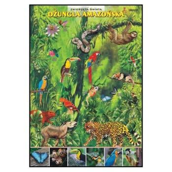 Plansze - występowanie zwierząt - Dżungla Amazońska