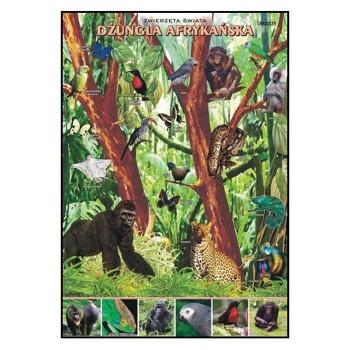 Plansze - występowanie zwierząt - Dżungla Afrykańska