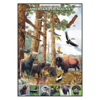 Plansze - występowanie zwierząt - Ameryka Północna