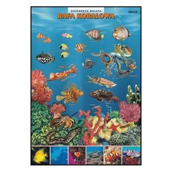 Plansze - występowanie zwierząt - Rafa koralowa