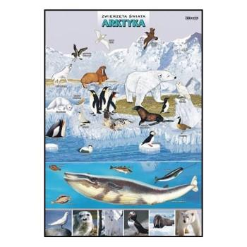 Plansze - występowanie zwierząt - Arktyka