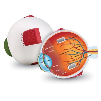 Piankowy model oka