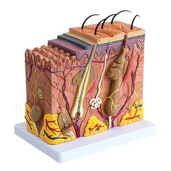 Model blokowy skóry