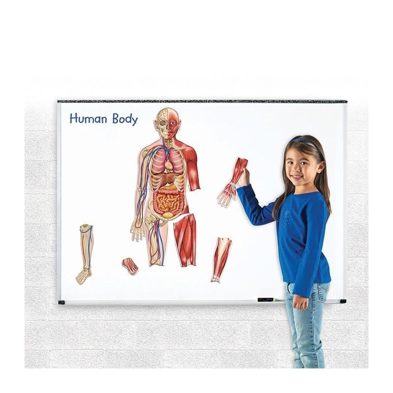 Magnetyczne ciało ludzkie - dwustronne