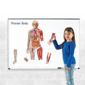 Magnetyczne ciało ludzkie - etykiety magnetyczne 28 elem.