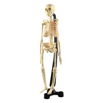 Szkielet - model 46 cm