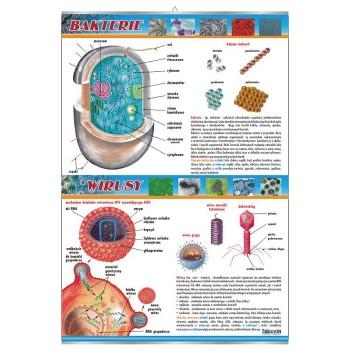 Plansza - Bakterie i wirusy