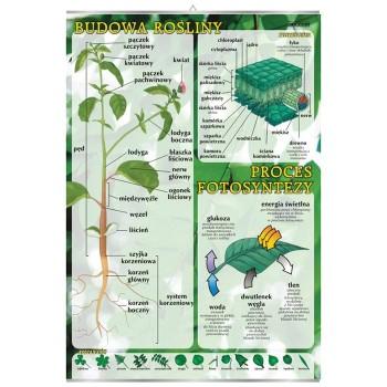 Plansza - Budowa rośliny,...