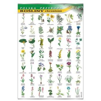 Plansza - Rośliny chronione
