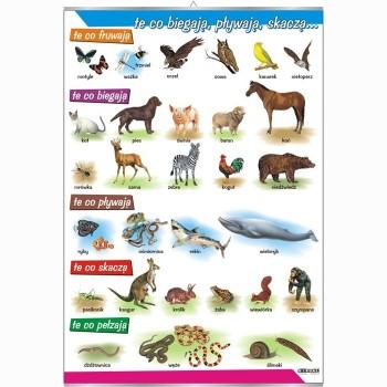 Plansze - występowanie zwierząt - Sahara