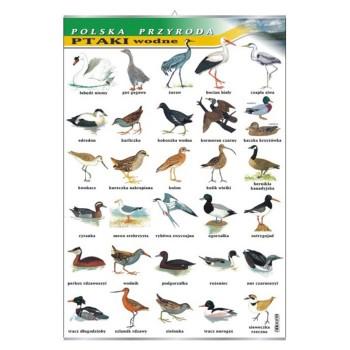 Plansza - Ptaki wodne