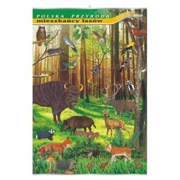 Plansza - Mieszkańcy lasów