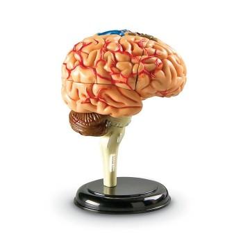 Mózg - mini model