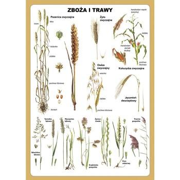Plansza - Zboża i trawy - mono