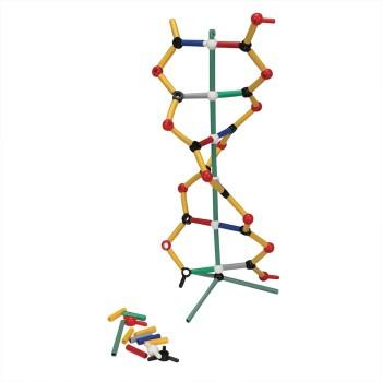 DNA - model uczniowski