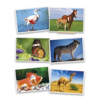 Fotografie zwierzęta