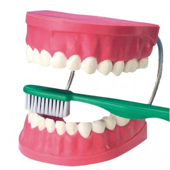 Model zębów
